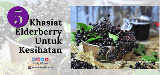 5-khasiat-elderberry-untuk-kesihatan, pengedar shaklee chemor, vitally vitamin, baizura bahar
